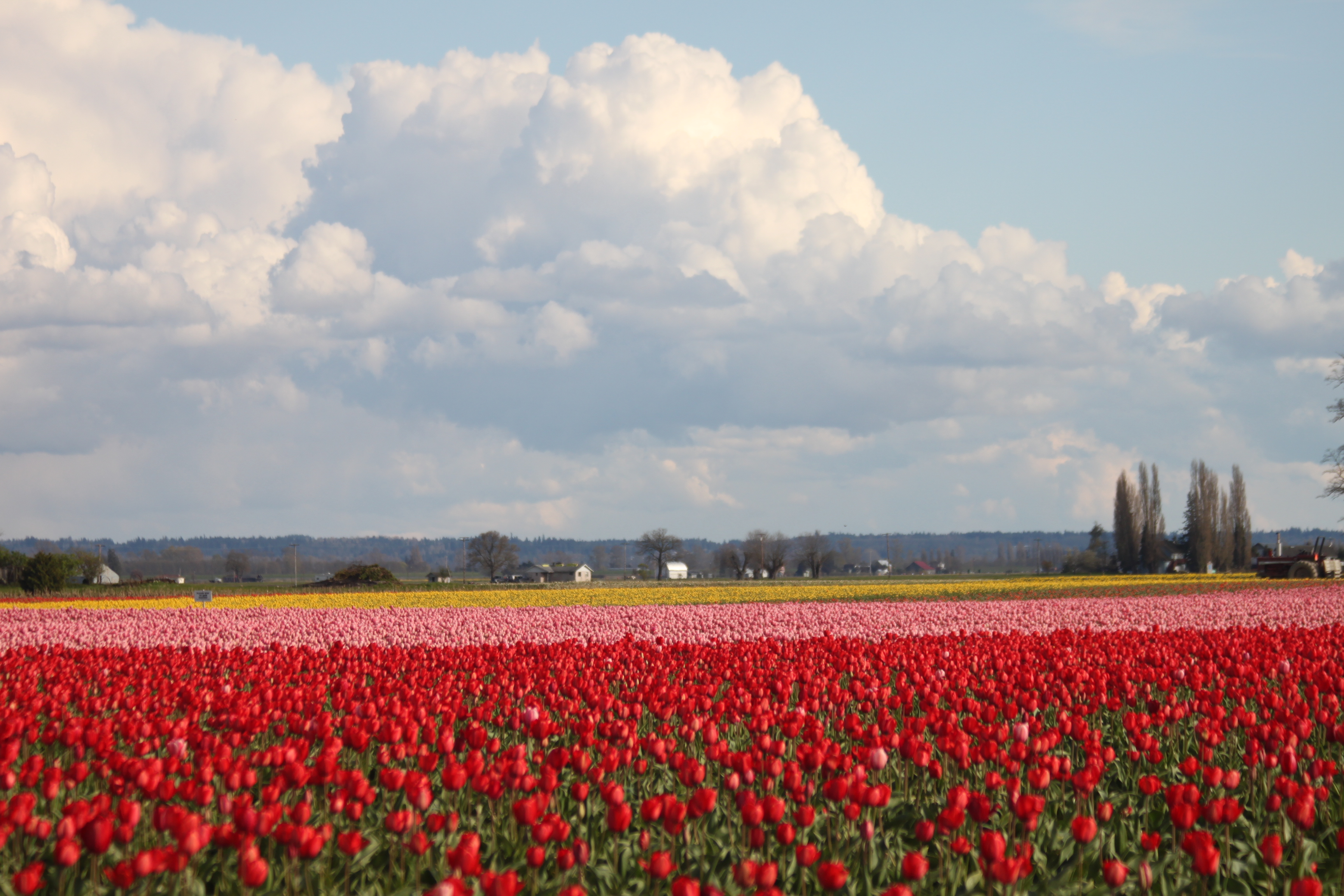 Tulip fields tulips field flower flowers tractor wallpaper ...